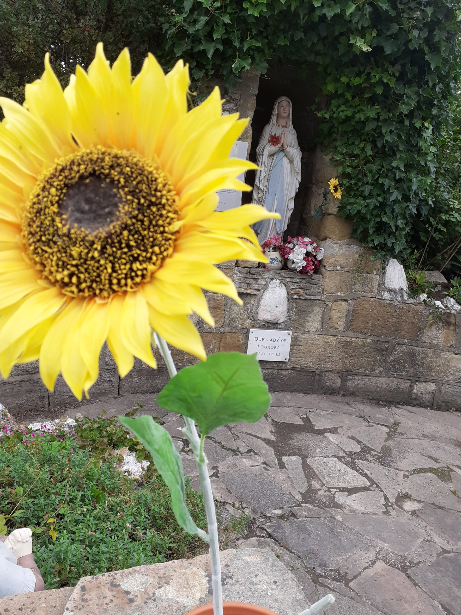 Artificial sunflowers dominate the grotto at Our Lady of Lourdes church, Saltburn.