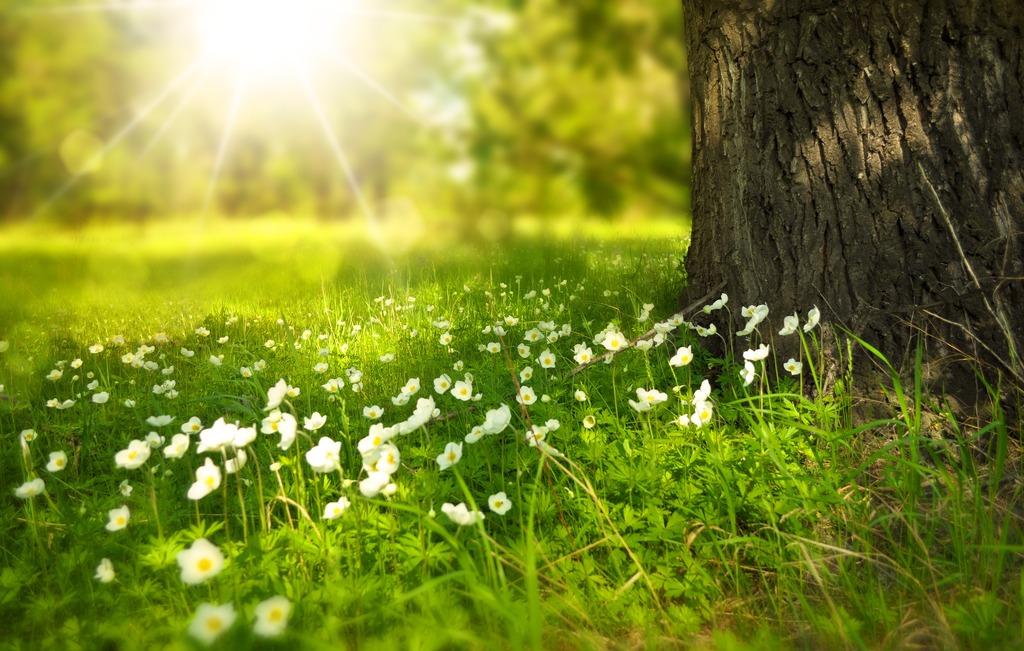 Bishops Release Pastoral Letter on Environment